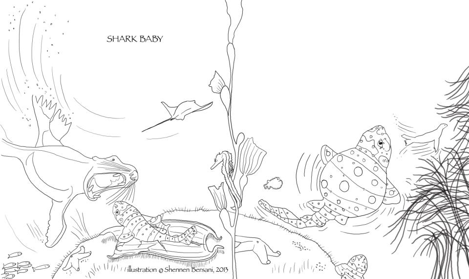 Shark Baby coloring page Shennen Bersani
