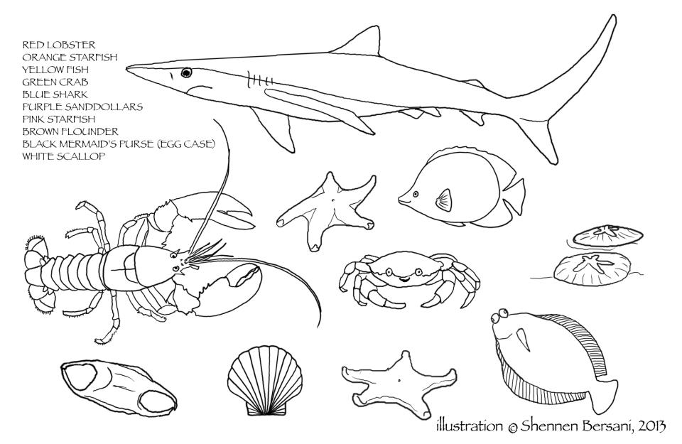 Ocean life coloring page. Shennen Bersani