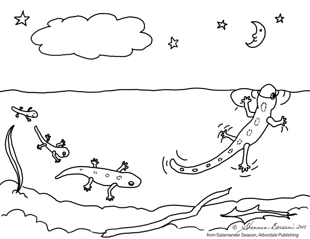 Spotted salamander development coloring page. Shennen Bersani