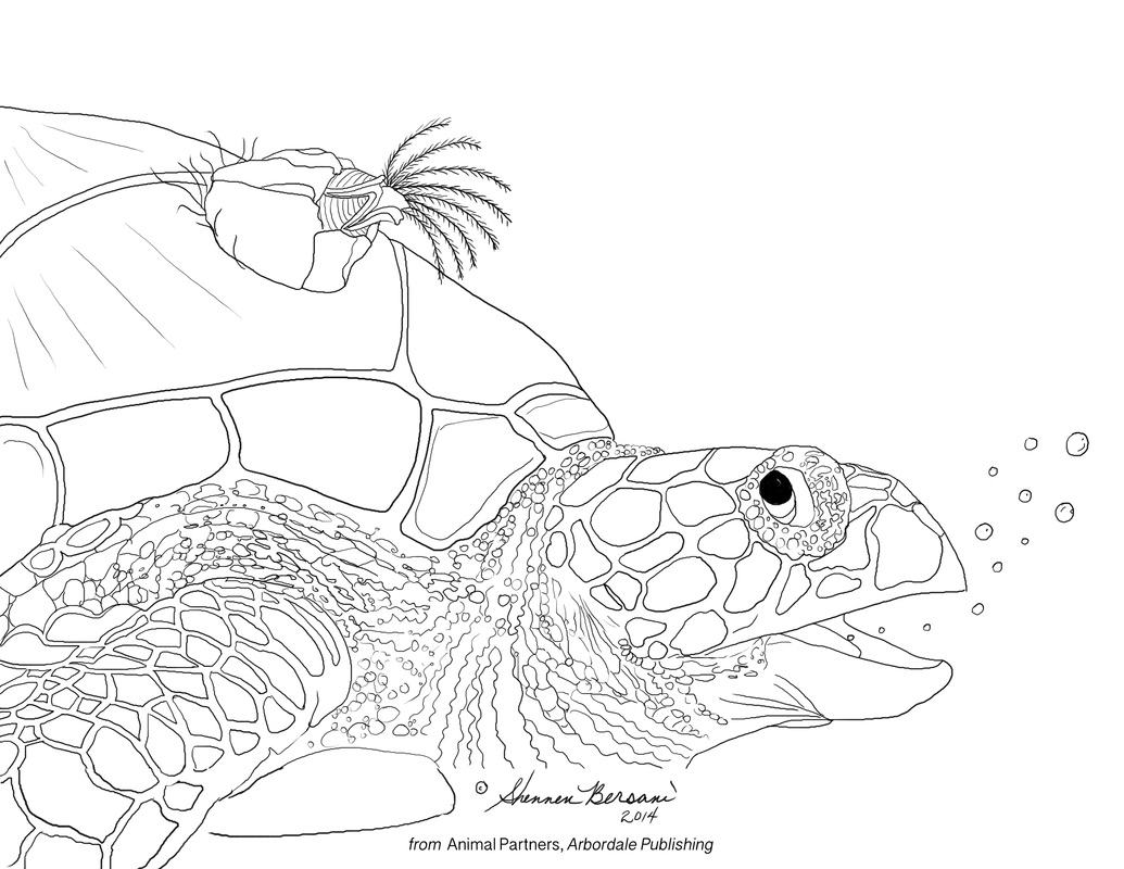 turtle and barnacle Animal Partners coloring page Shennen Bersani