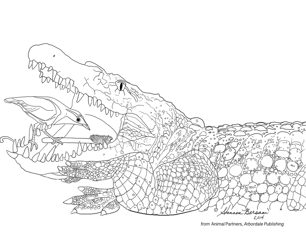 crocodile and plover coloring page Shennen Bersani